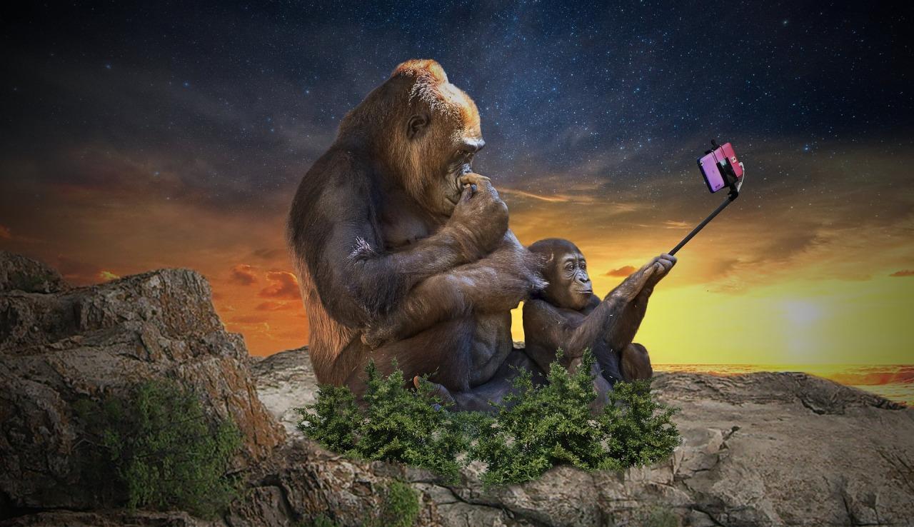monkey-3554261_1920.jpg